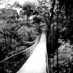 Cee's Photo Challenge: Path 2