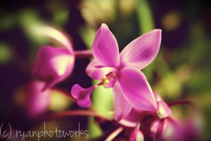 bogor botanical garden orchid conservation area