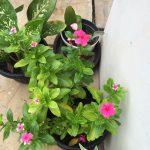 Mom's Garden 4