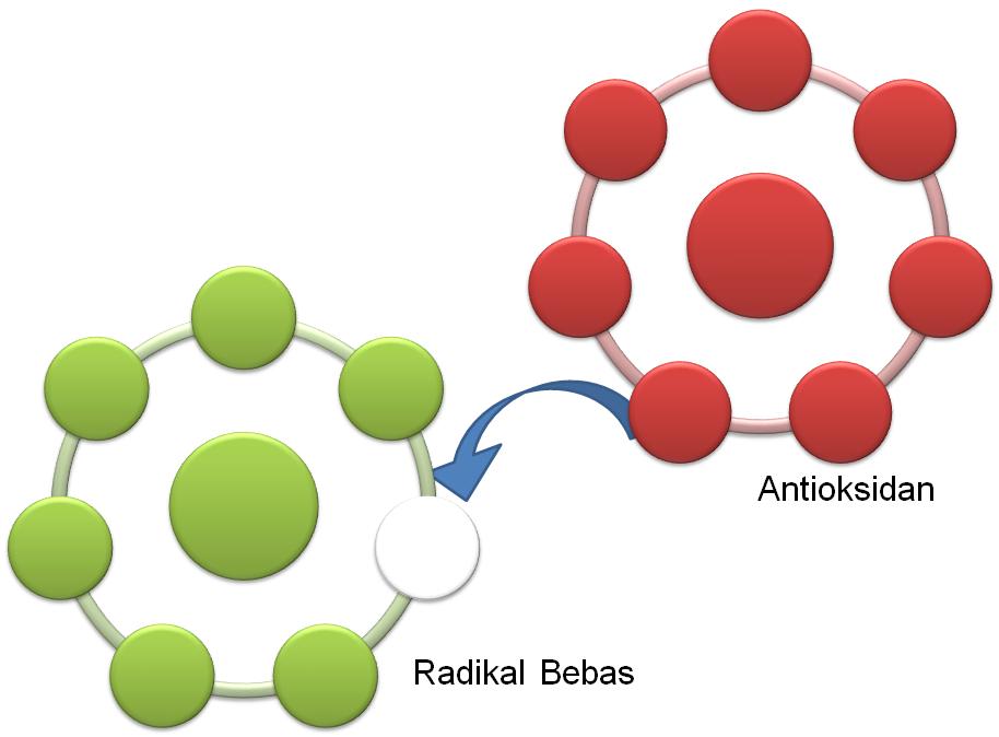 antioksidan dan radikal bebas dalam tubuh